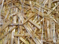 AEC_Premier_Straw_Close_Up_medium