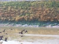 Bio_Options_Wildlife_enjoying_pond_medium