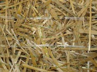 Eco_-_DN_Straw_close_up_medium
